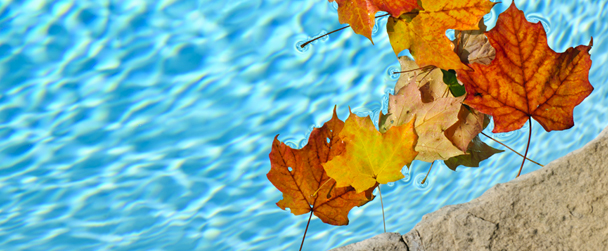 Leaves in Pool